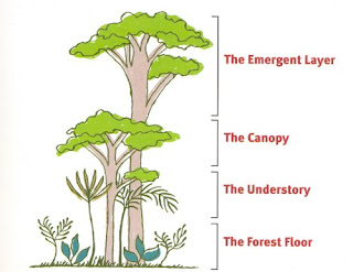 the canopy layer of the rainforest