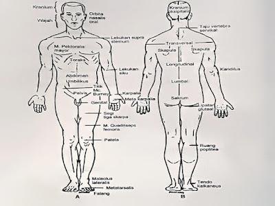 Gambar Kedudukan Anatomi Dan Fisiologi Dalam Keperawatan