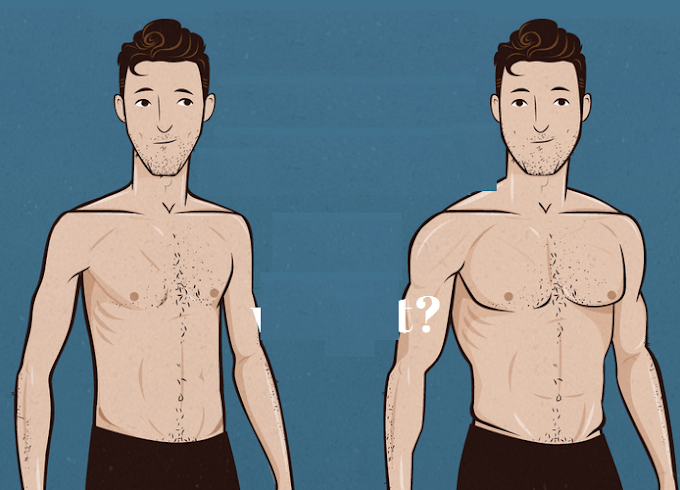 How to build muscle for ectomorphs ?