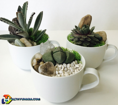 Home Decorating Ideas With Succulent Plant