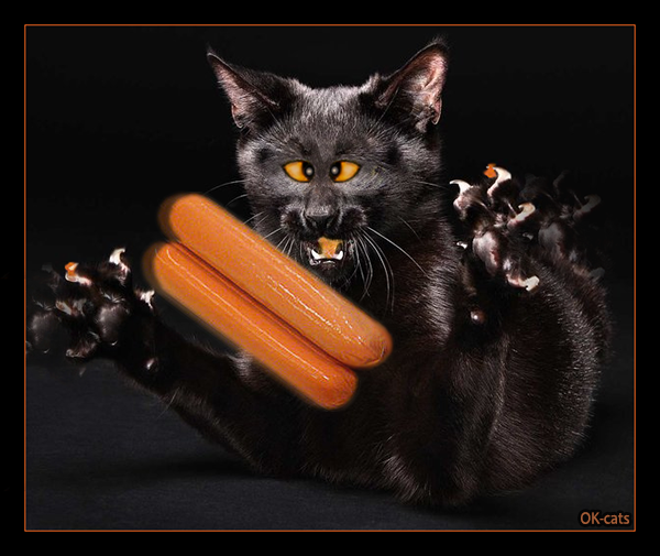 Photoshopped Cat picture • Black cat on a diet goes nuts when he sees his fav sausages