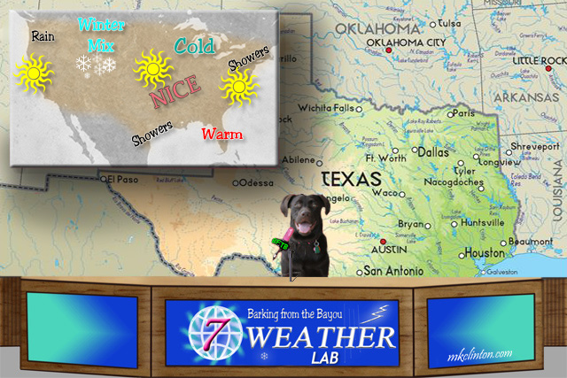 Black Lab forecasting the weather
