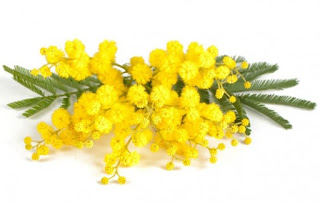 fiore simbolo della Festa delle Donne