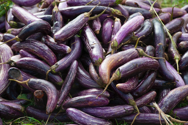 a bunch of eggplant