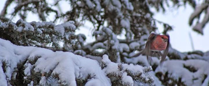 Alaska with attitude : January 2015