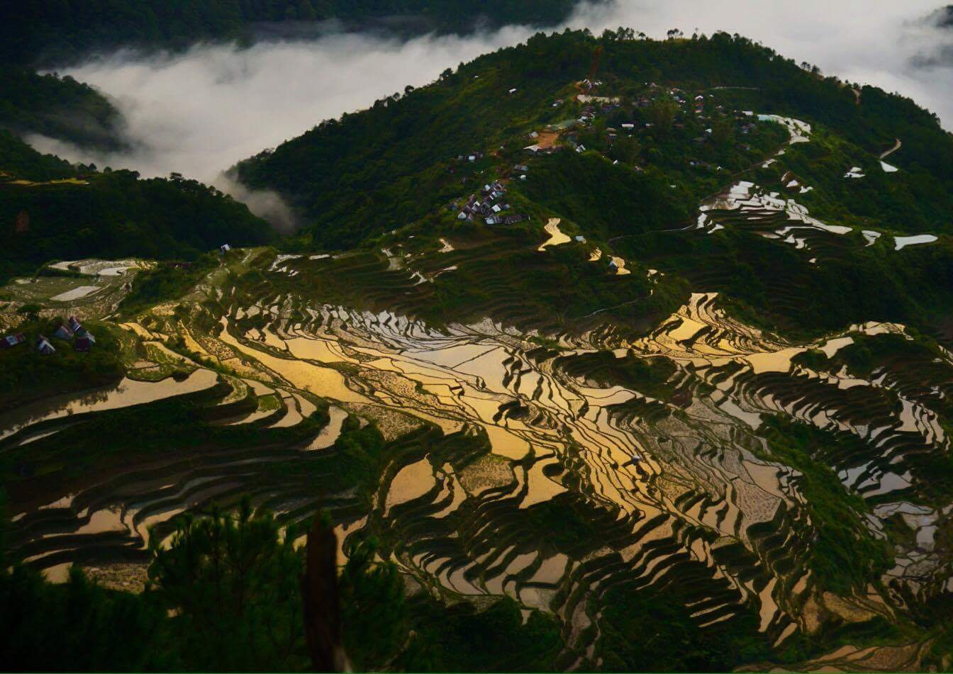Maligcong Rice Terraces seen on Mt. Kupapey