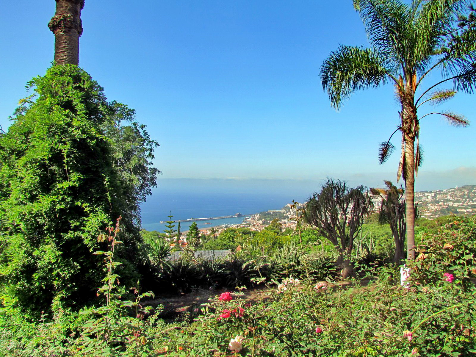 garden with a view to Funchal center