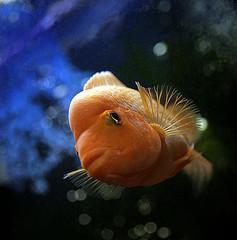 Bisnis Ikan Hias Aquarium