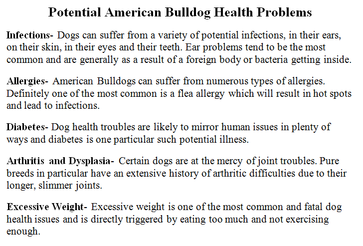 english bulldog health issues bulldog diet potential bulldog health problems better1of 5291