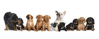 insan ve hayvan sevgisi ile ilgili aramalar aşırı hayvan sevgisi psikoloji  psikolojide hayvan sevgisi  hayvan sevgisi anlamı  hayvan sevgisini abartmak  hayvan sevgisi ekşi  hayvan sevgisi nedir  hayvan sevgisi kompozisyon  hayvan bağımlılığı sendromu