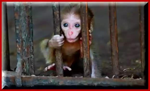 بسبب كورونا مصر تغلق جميع حدائق الحيوان وتتخذ إجراءات وقائية لحماية الحيوانات