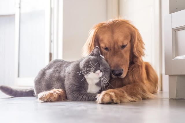 Disarankan Dokter Jadi Obat COVID-19, Daging Kucing dan Anjing Marak Dijual di Vietnam