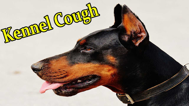can-simplicef-be-used-for-kennel-cough-in-dogs