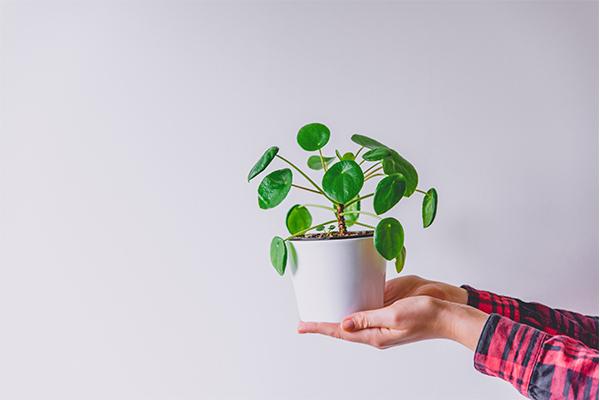 Para çiçeği bakımı ile ilgili 5 ipucu