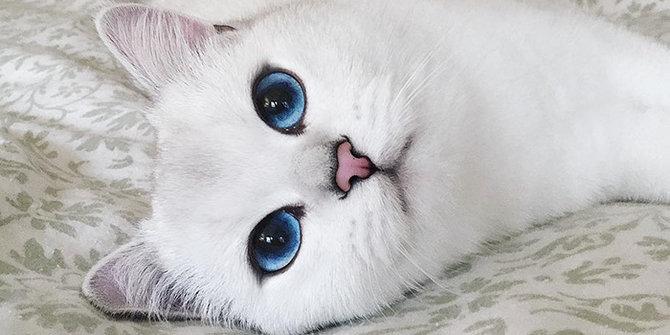 Seekor Kucing Bermata Biru Pukau Ribuan Netizen Publish