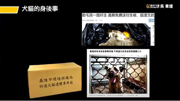 守護犬貓生命最後尊嚴 吳韋達要求人道化處理