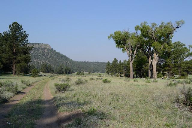 big trees, ruts, and a mesa