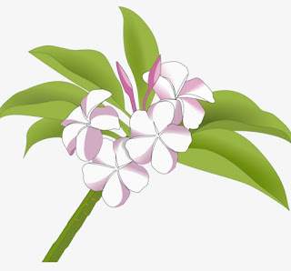Sketch of Jasmine Flower