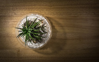How to care for air plants