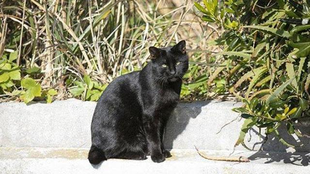 KEJAM! Kucing Hitam Dijadikan Obat Corona, Diburu & Dimasak, Bocor Rekaman Sedih Sebelum Dikonsumsi