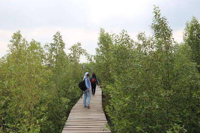 Mempawah Mangrove Conservation, Memadukan Lokasi Wisata dengan Edukasi dan Konservasi