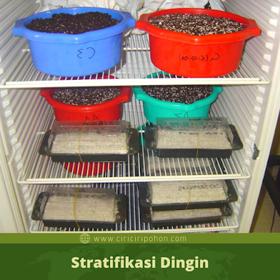 Stratifikasi Dingin