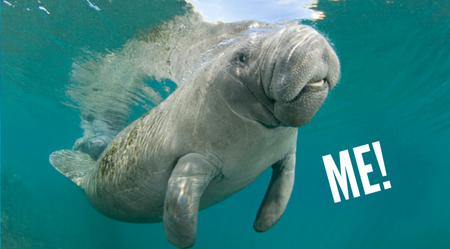 image of a manatee with text reading: 'ME!'