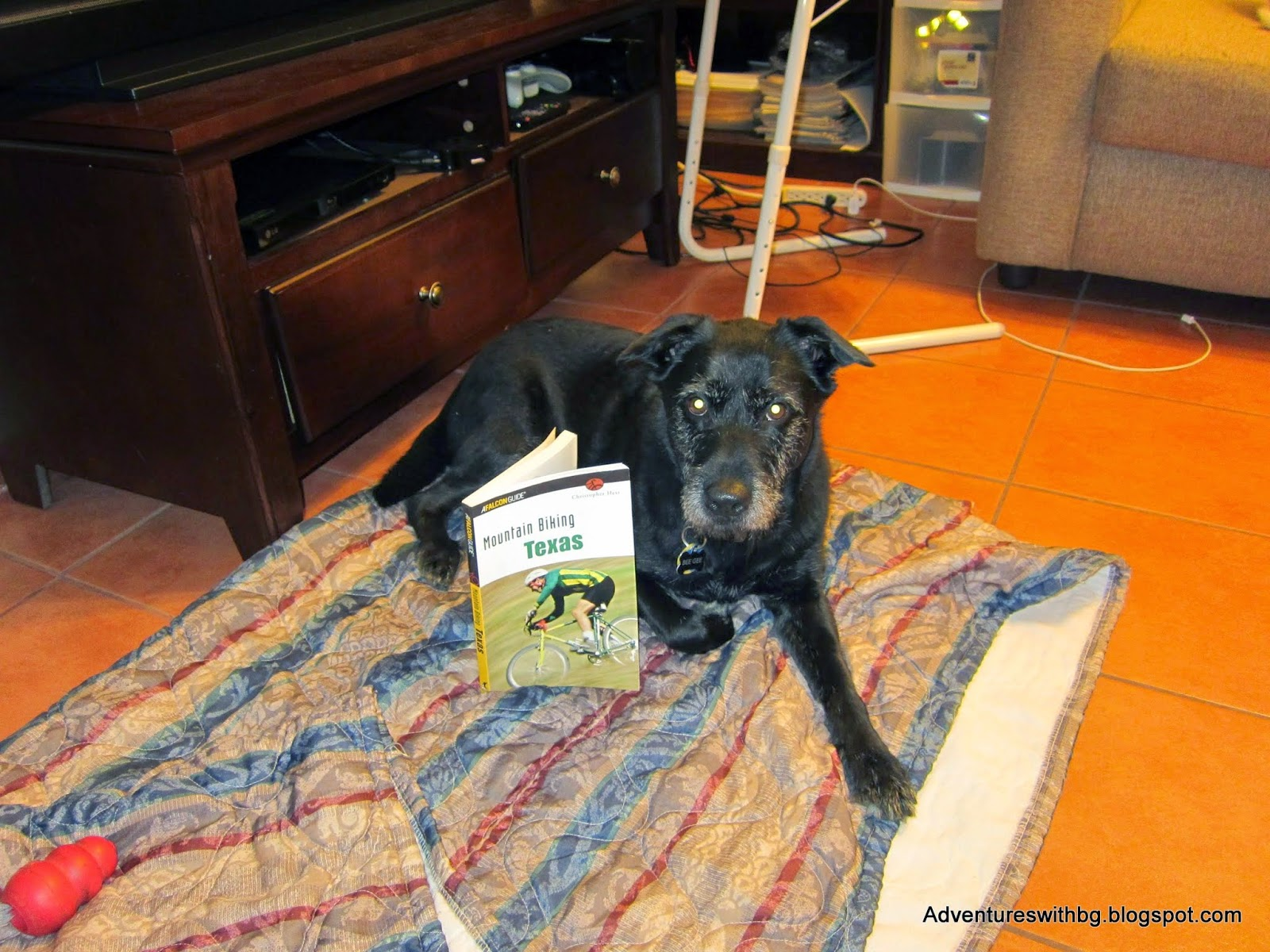 BeeGee the dog reading the reviewed book
