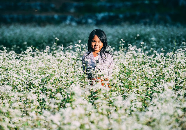 Everything About The Buckwheat Flower Season In Ha Giang 2
