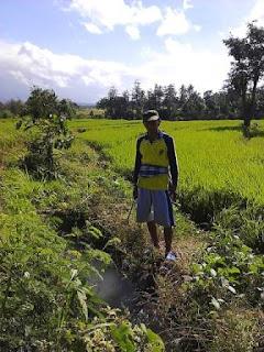 Tugas Pokok dan Fungsi Penyuluh Pertanian Swadaya