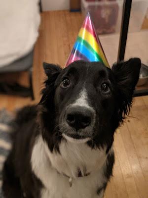 border collie dog wearing a birthday hat