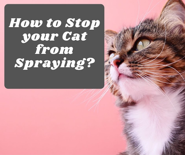How to stop your cat from spraying.