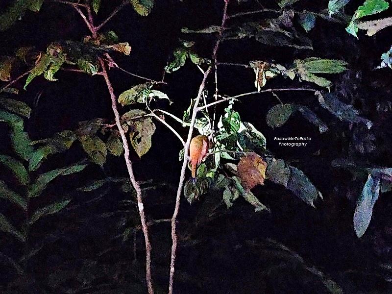 Myne Resort Bilit - Night Safari - Bird