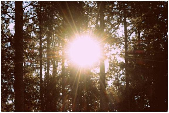 Häikäisevän kirkas auringonpaiste puitten runkojen välistä.