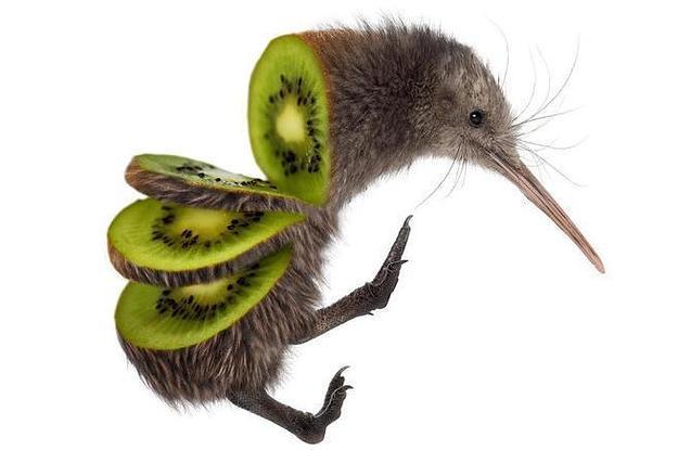 Kiwi Bird Facts And Kiwi In Hindi