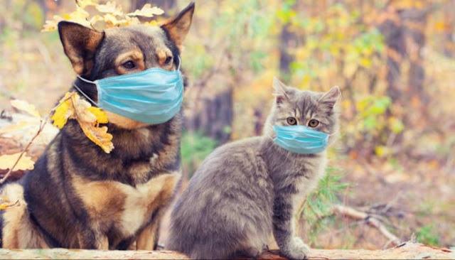 روسيا تنتج أول دفعة من لقاح كوفيد للحيوانات