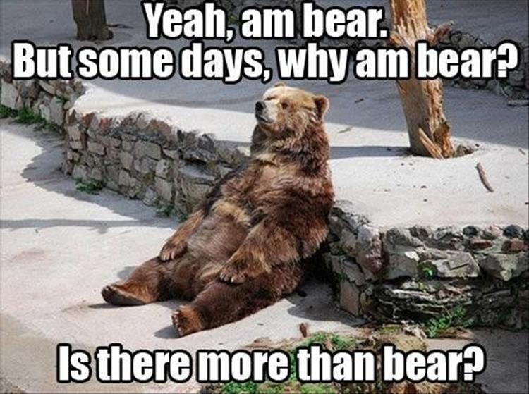 30 Funny animal captions - part 58, animal meme, funny caption picture, funny animal images