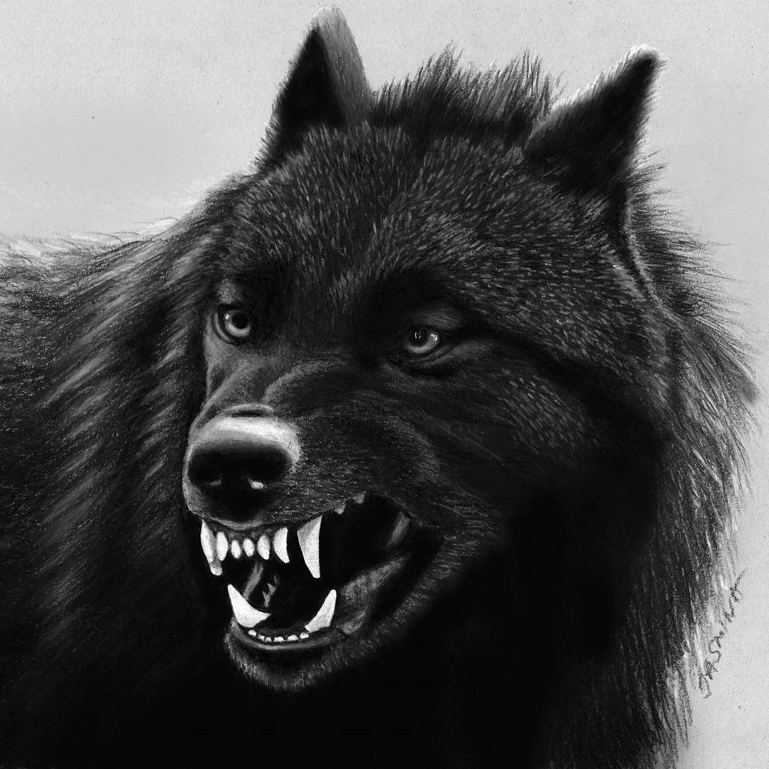 11-Black-Wolf-Jasmina-Susak-Realistic-Animal-Drawings-with-Colored-Pencils-www-designstack-co