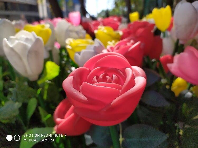 Redmi Note 7 Review Sample Camera - Macro