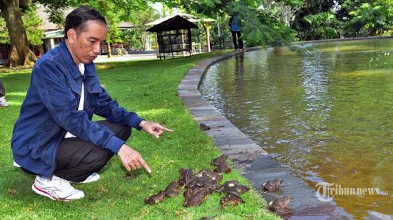 Bapak Presiden Joko Widodo dan Kolam Cebong - Catatan Nizwar ID