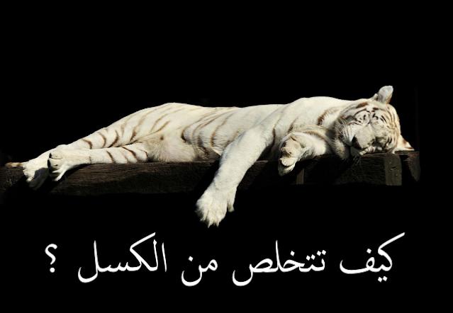 نمر أبيض كسلان نائم