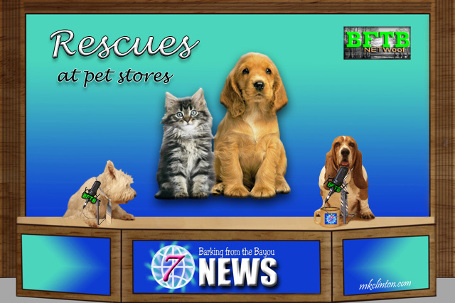 BFTB NETWoof News reports on rescue pets being sold at pet stores
