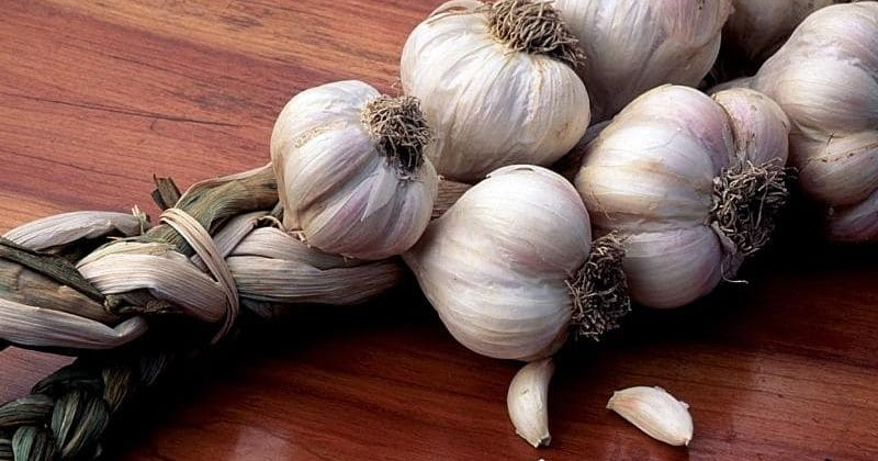 Garlic Can Kill 14 Different Infections! So Why Don't Doctors Recommend It..?
