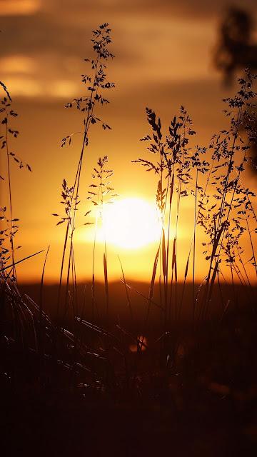 HD Wallpaper Sunset Grass