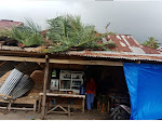 Dihoyak Badai, Pohon Kelapa Tumbang Timpa Rumah Warga di Bungus Teluk Kabung