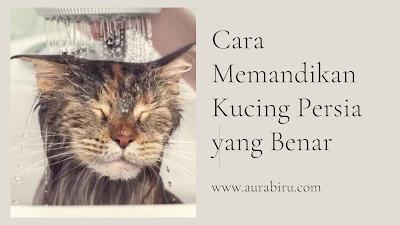 cara memandikan kucing persia yang benar