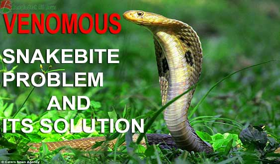 Venomous Snake Bite - Snakebite Problem and Its Solution