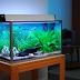 Gambar Model Aquarium Minimalis Paling Unik dan Keren