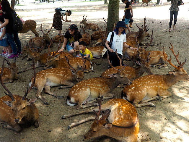 Deer in Nara Park, Kansai, Japan