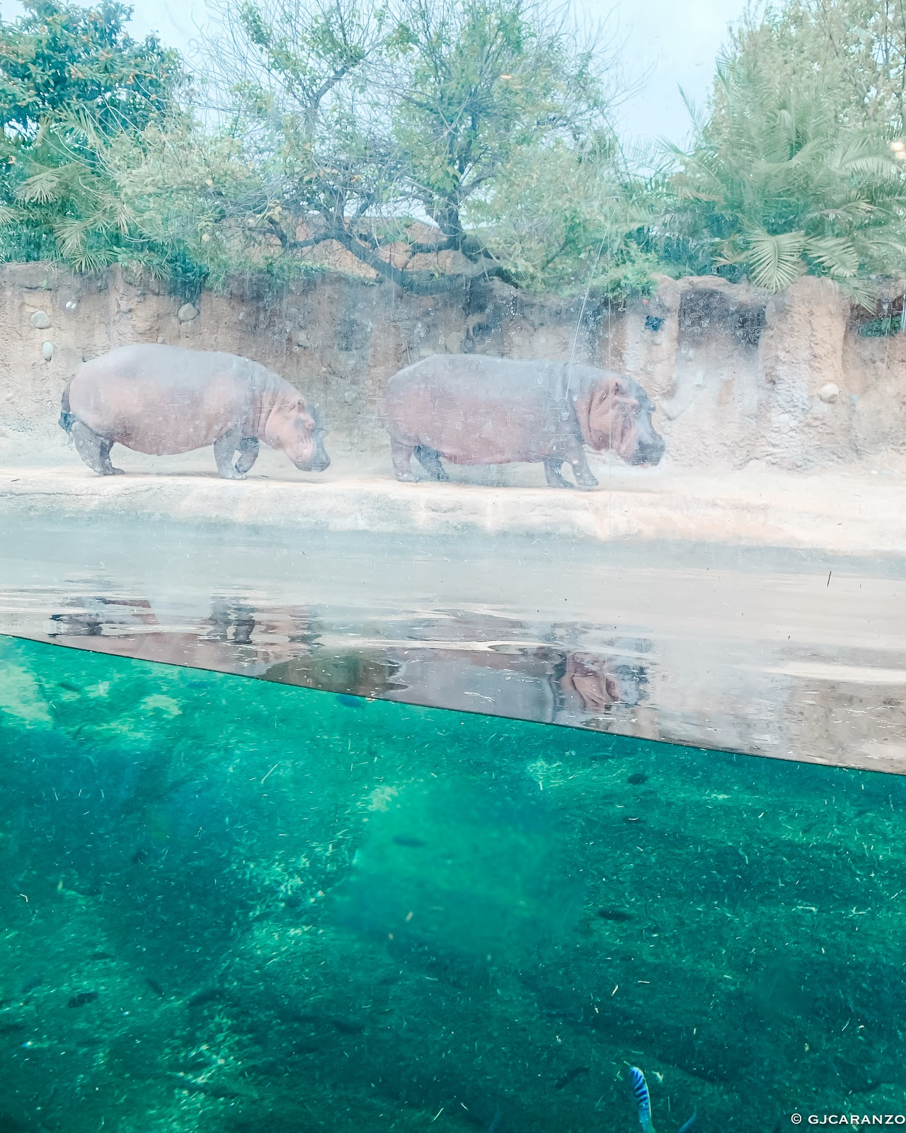 The San Antonio Zoo: Things To Do in Texas, USA